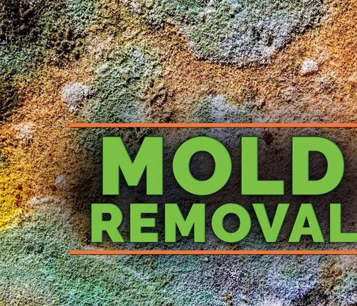 Mold Remediation We are the right call for mold damage in your home