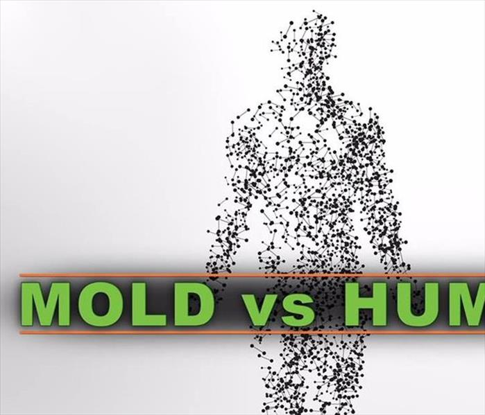 Mold Remediation Mold in your home
